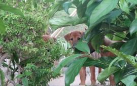 Visit Lanta Animal Welfare